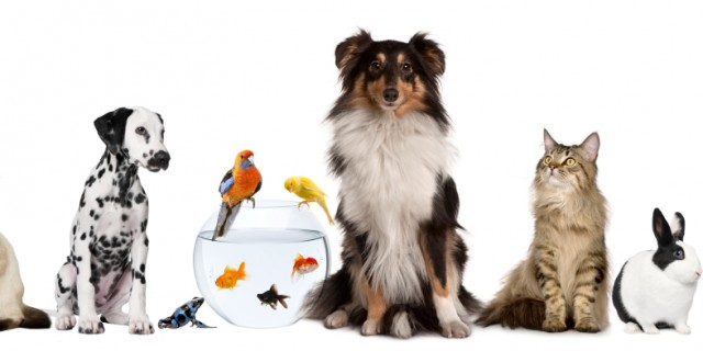 iStock_000016415081Small group animal